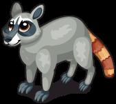Cozumel raccoon single