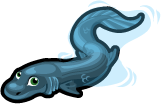 Frilled shark single