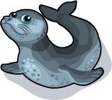 Leopard Seal single