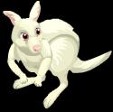 Albino kangaroo static