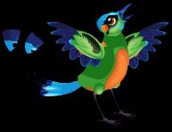 Motmot bird an