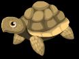 African tortoise static