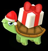 Gift turtle single