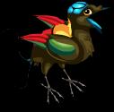 Wilsons bird of paradise an