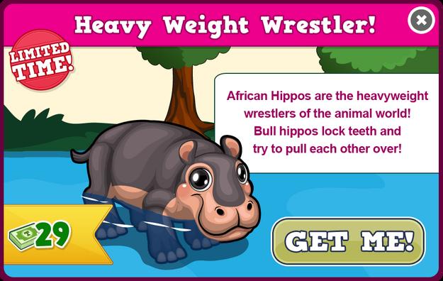 African hippo modal