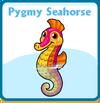 Pygmy seahorse card