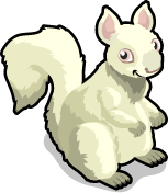 Albino Squirrel single