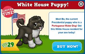 Portuguese water dog modal