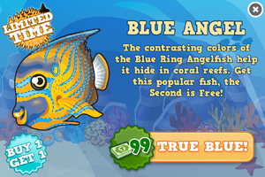 Blue ring angelfish modal