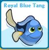 Royal blue tang card
