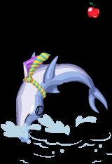 Teacher dolphin an