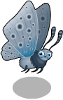 Large blue butterfly static