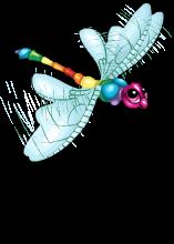 Rainbow dragonfly an