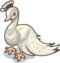 Albino Peacock single