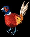 Pheasant static