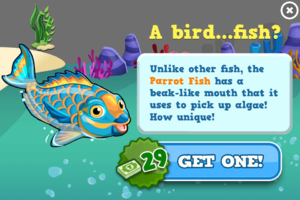 Parrot fish modal