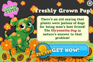 Chrysanthe-pup modal