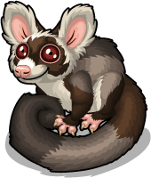 Greater glider single