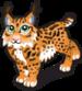 Iberian lynx single