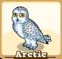 Store arctic