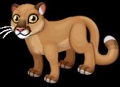 Florida panther single