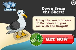 Seagull modal