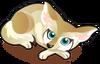 Fennec Fox single