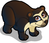 Spectacled Bear single