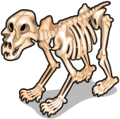 Bear skeleton single
