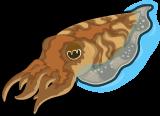 Cuttlefish single