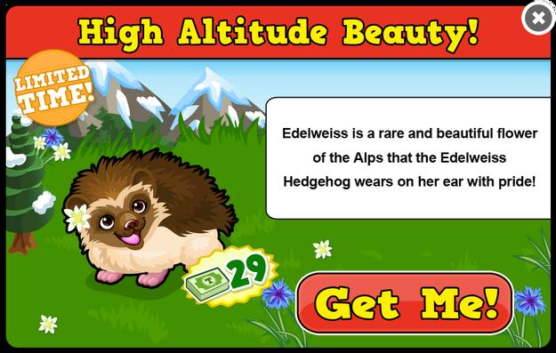 Edelweiss hedgehog modal