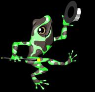 Poison arrow frog an