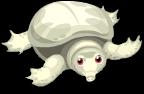 Albino soft-shelled turtle static
