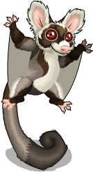 Greater glider an