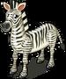 Grevy's zebra single