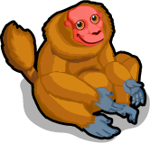 Red Uakari single