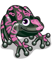 Harlequin toad single