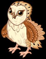 Barn owl single