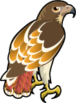 Red-Tailed Hawk single