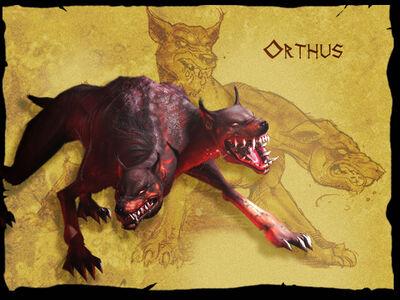 Orthus