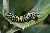 Caterpillar-58b9e64d3df78c353c59f17d