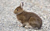 Bunny-rabbit-AUSAIRPORT0618