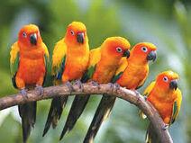 Birds lol