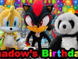 Shadow's Birthday!