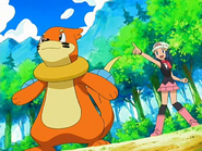 Dawn and Buizel
