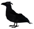 Crow Full.png
