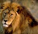 Lista gatunków w uniwersum Króla Lwa/Galeria