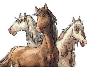 Horsesss