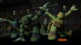 Turtles land