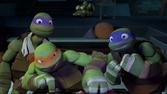 207-Turtles2